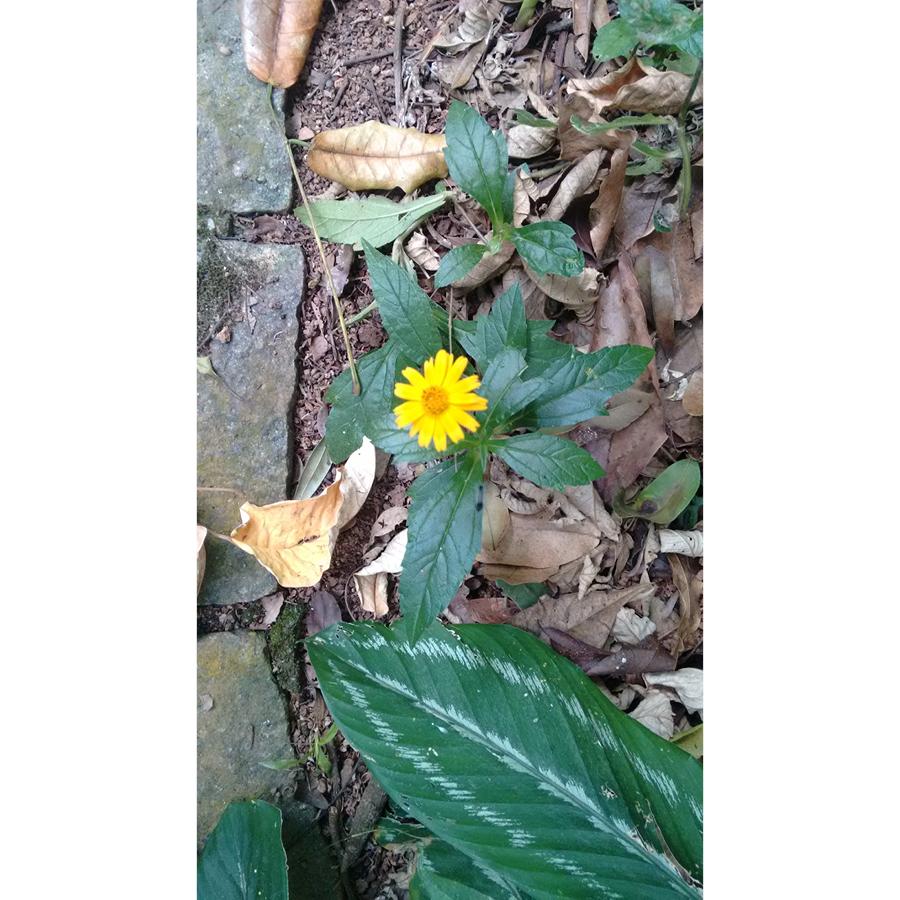 primavera andeira